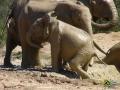 Elefanten im Addo Elephant Park, Südafrika